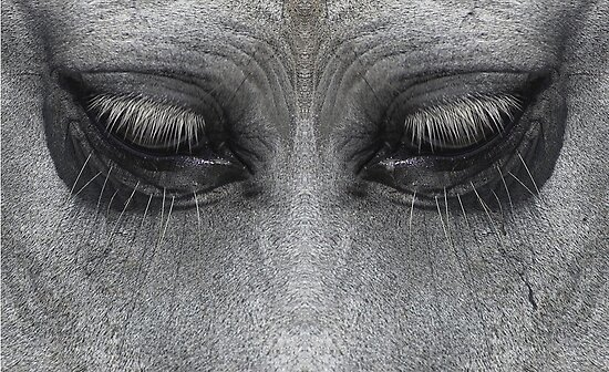 Tears Of A Horse by AJM Photography