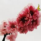Floating Peach Branch by Emma-Louise Bussey