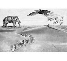 desert elephants Photographic Print