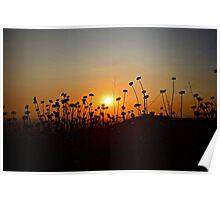 Setting Sunflower Poster
