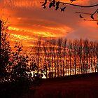 Winter sunset by Braedene