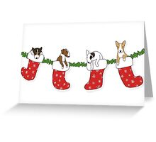 Christmas Bull Terrier Puppies - Transparent Greeting Card