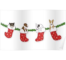Christmas Bull Terrier Puppies - Transparent Poster