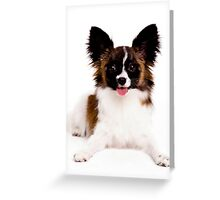 Smiling Papillon Puppy Greeting Card