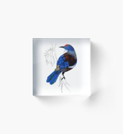 Tui - New Zealand bird Acrylic Block