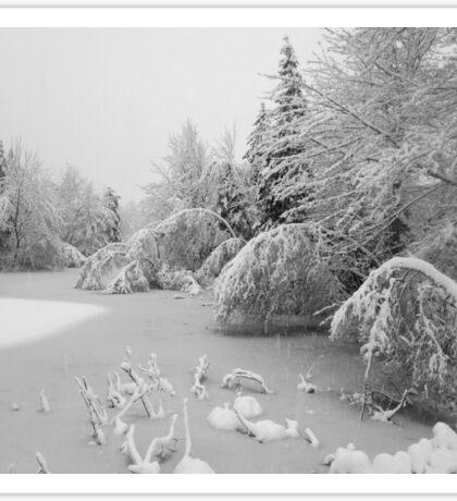 Nova Scotia Winter Pond Sticker
