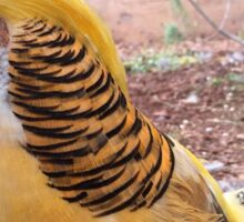 Pheasant at the Fair Sticker