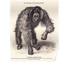vector monkey Poster