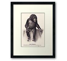 vector monkey child Framed Print