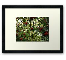 Rowan Jungle Framed Print