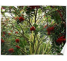 Rowan Jungle Poster