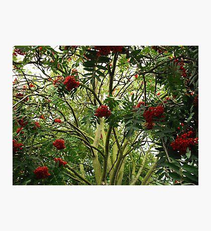 Rowan Jungle Photographic Print