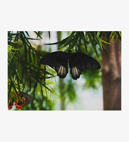 Butterfly on leaves Photographic Print