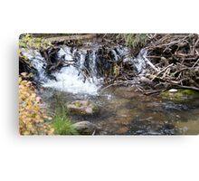 Natural Beaver Dam Canvas Print