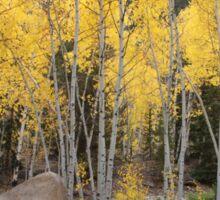 Autumn Colorado Aspens Sticker