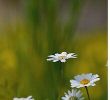 Spring by Kostas Kalomiris