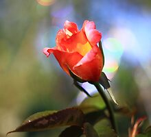 Bokeh Rose -Vintage Russian Lens Blur by Mark Haynes Photography