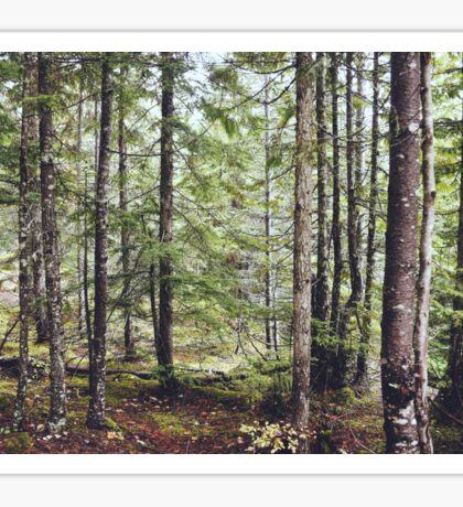 Squamish Forest Floor Sticker