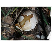 Penguins egg? Poster
