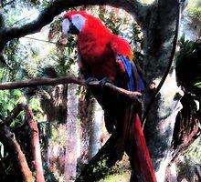 Red Macaw 2332 by korokstudios