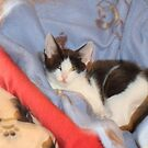 Mario, Our Latest Rescued Cat at 3 months by Dennis Melling