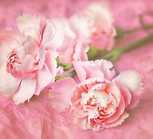Pinks by Ellesscee