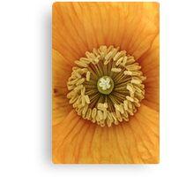 Orange poppy macro. Canvas Print