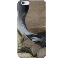 Heron picking for left overs  iPhone Case/Skin