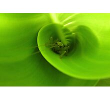It's not that easy being green ... Photographic Print