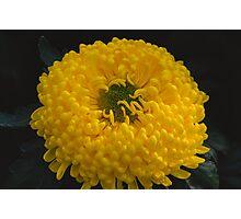 Big and yellow Photographic Print