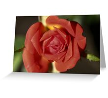 The Miniature Rose Greeting Card