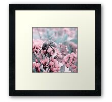 Bumble Bee on Pastel Pink Flowers Framed Print