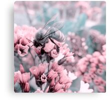 Bumble Bee on Pastel Pink Flowers Canvas Print
