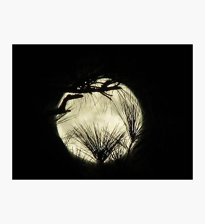 moony Photographic Print