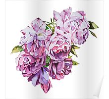 Watercolor flowers Roses. Poster