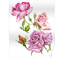 Watercolor bouquet of flowers roses Poster