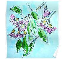Eucalyptus Blossom. Poster