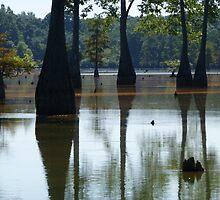 Cypress Reflection by WildestArt