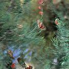 Butterflies in Windy Weather by cishvilli