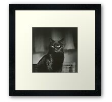 Portrait of black cat square black and white analogue medium format film Hasselblad  photograph Framed Print