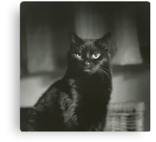 Portrait of black cat square black and white analogue medium format film Hasselblad  photograph Canvas Print