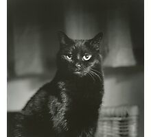 Portrait of black cat square black and white analogue medium format film Hasselblad  photograph Photographic Print