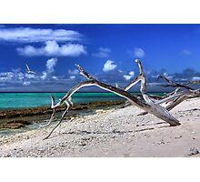 Sun, sand, surf ....... and tree. Photographic Print
