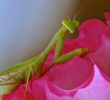 Posing Mantis by tayloredbytessa