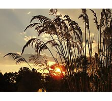 Egypt Grass  Photographic Print