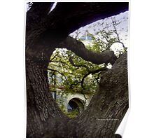 The Hanging Tree in Goliad, Texas Poster