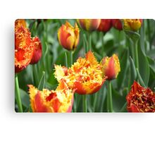 Curly Daffodils Canvas Print