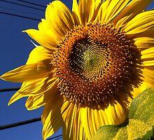 Giant Sunflower by tayloredbytessa