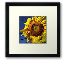 Giant Sunflower Framed Print