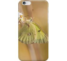 Pretty Little Butterfly iPhone Case/Skin